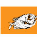 Catalufa | digital drawing