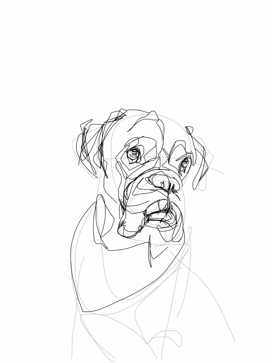 Boxer Dog | Digital drawing