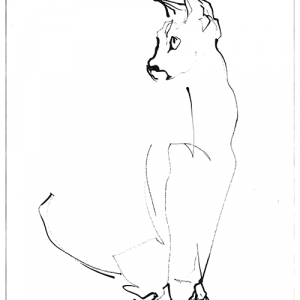 Cat 01, ink drawing| print available