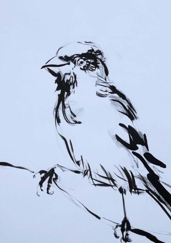 Sketch / study painting for Wallpaper Birds | acrylic on A3 paper - 05
