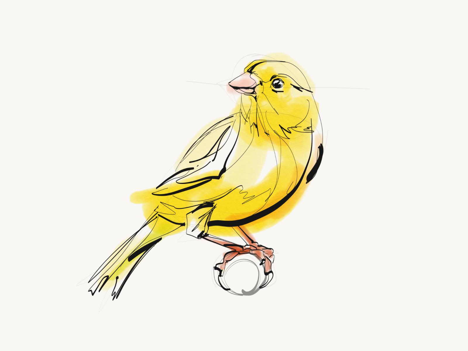 Canary Bird | Digital Drawing | Print