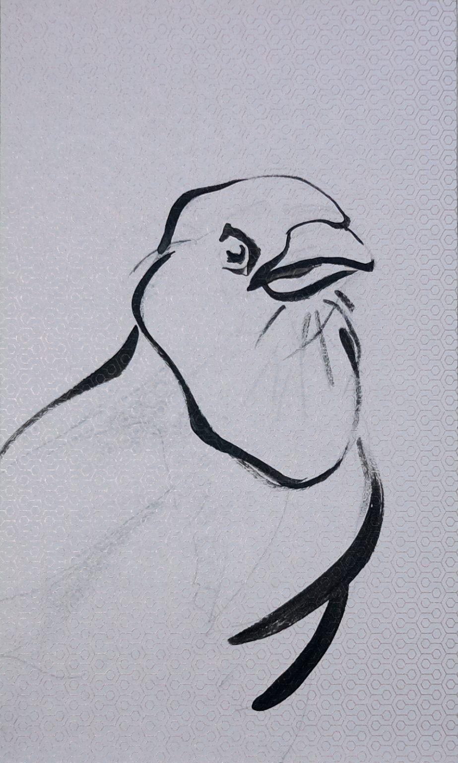 Koetzier van Hooff | Wallpaper Series | Bird Portrait