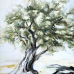 Olive Tree Spain | Árbol Oliva España | commission