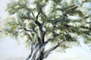 Olive Tree Spain | Árbol Oliva España | commission