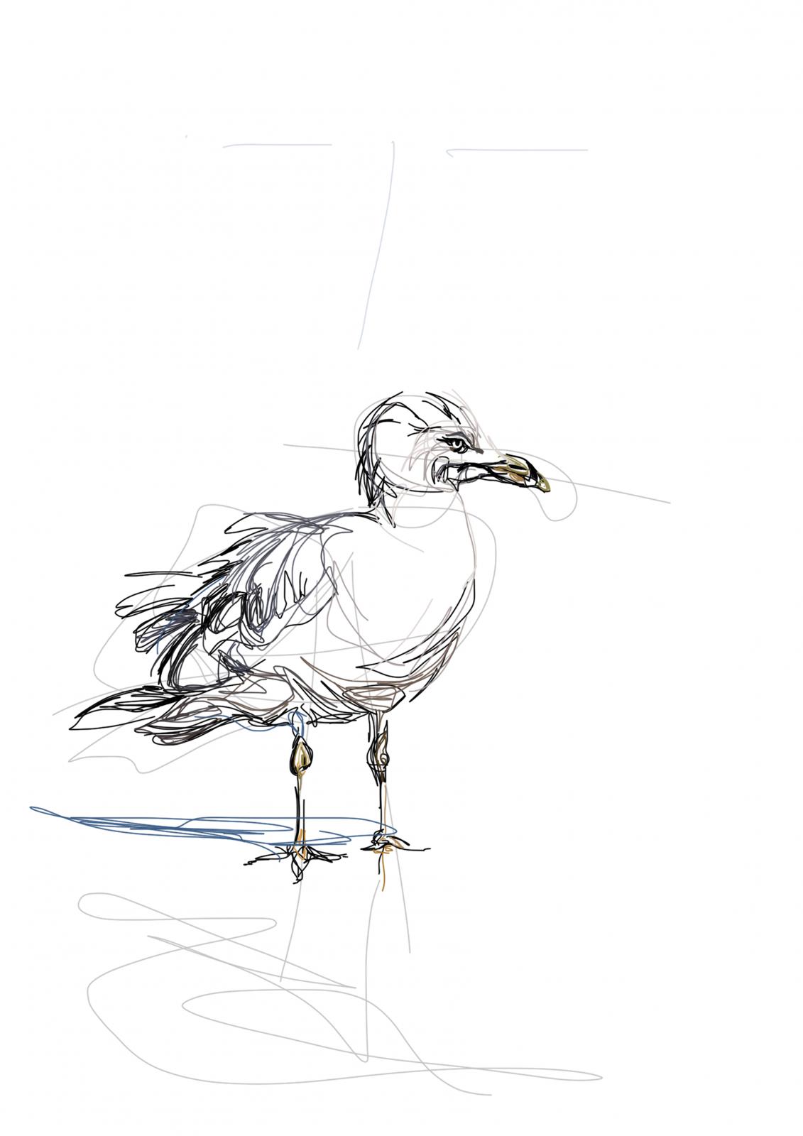 Seagull   Digital Drawing