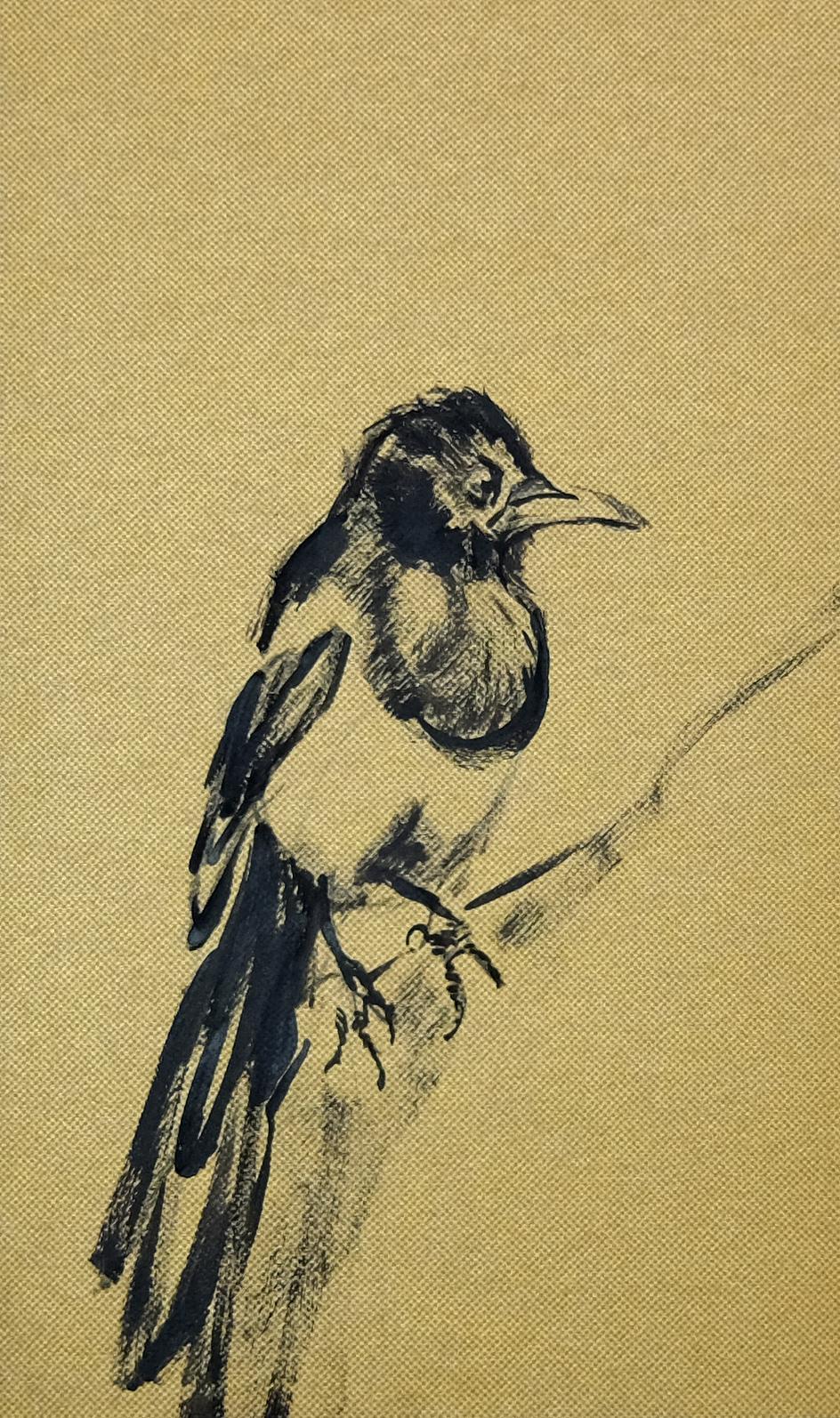Bird   Wallpaper Series