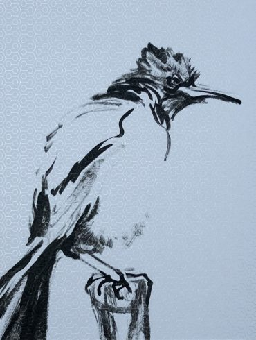 Moody Bird   Wallpaper Series