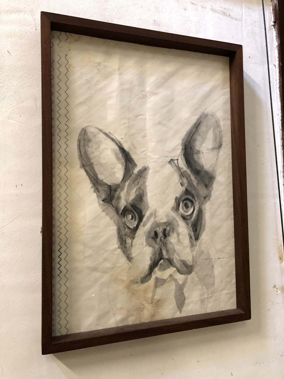 French Bulldog Puppy Dog on Sail